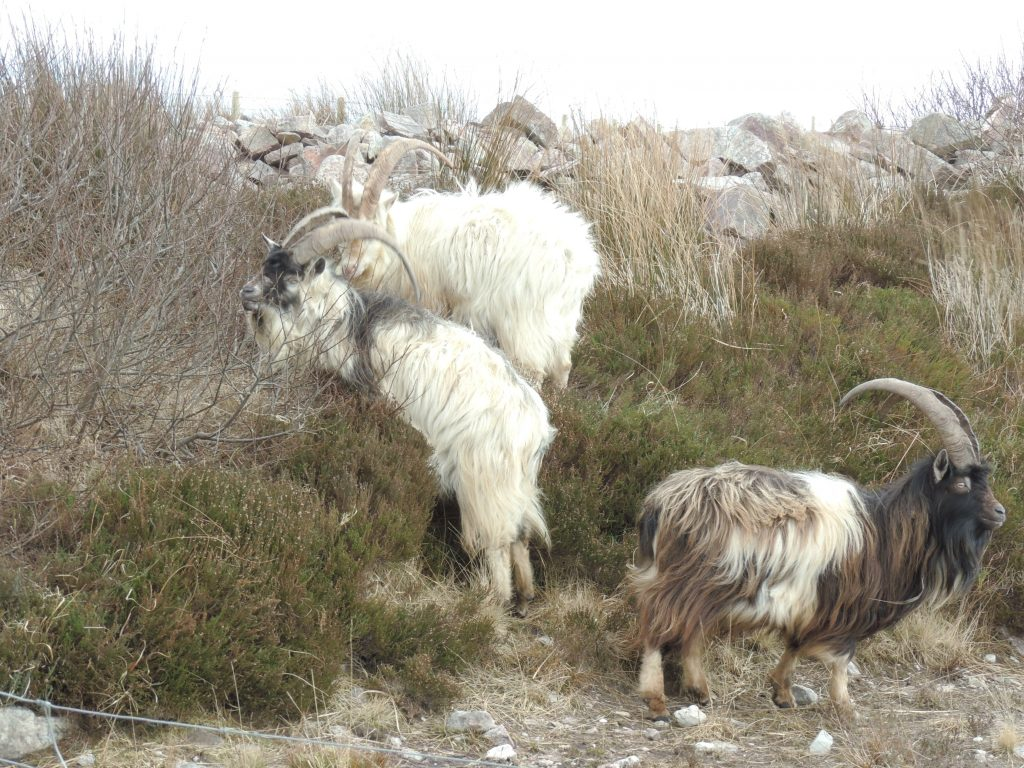 Wildlife on Islay on campervan tour Scotland