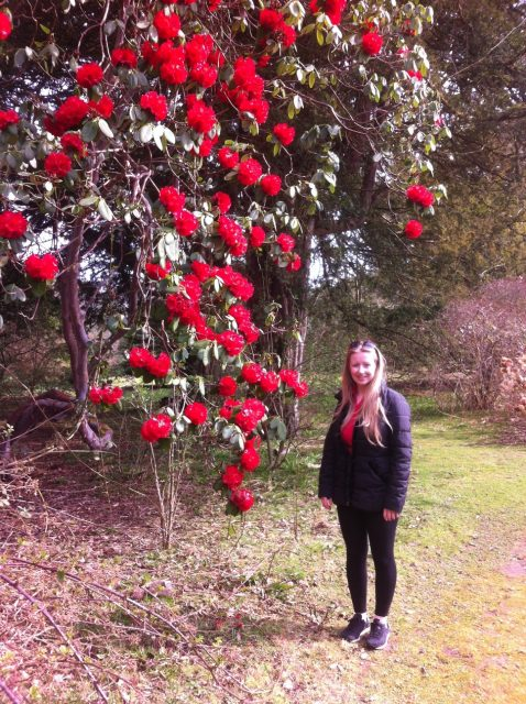 Visit Scotland in May and see the rhododendrons
