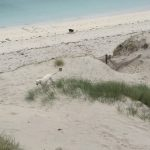 the natural fauna on a campervan road trip outer hebrides